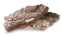 Pezzi di corteccia asciutta della betulla e della quercia Immagine Stock