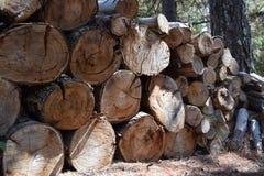 Pezzi di legname chunked di legno dell'albero Immagine Stock Libera da Diritti