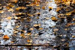 Pezzi di legno e di foglie di autunno in acqua paludosa fotografia stock