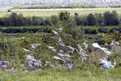 Pezzi di sacchetti di plastica che appendono negli alberi soffiati via dal vento Disastro ecologico fotografia stock libera da diritti
