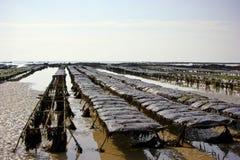 Pezzi di terra coltivati a ostrica Immagine Stock Libera da Diritti