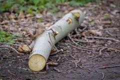 Pezzo di ceppo di legno Fotografia Stock