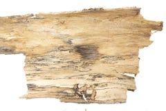 Pezzo di corteccia di albero, su bianco fotografie stock