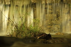 Pezzo di erba sull'acqua Immagini Stock