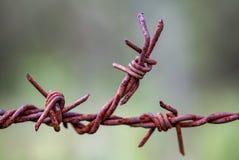 Pezzo di filo spinato arrugginito fotografia stock