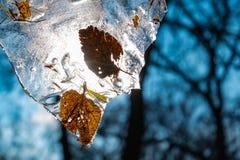 Pezzo di ghiaccio con le foglie gialle congelate fotografia stock