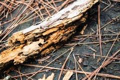 Pezzo di legno ammuffito marcio Fotografia Stock Libera da Diritti