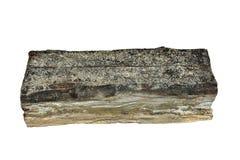 Pezzo di legno isolato decomposto tramite la putrefazione a secco immagini stock libere da diritti