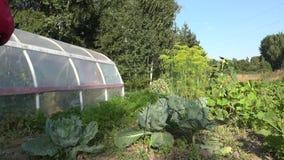 Pezzo di terra coltivato al cavolo dello spruzzo dell'uomo in giardino Protezione dal parassita, erbaccia 4K video d archivio