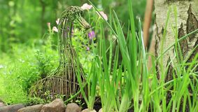 Pezzo di terra coltivato alla cipolla verde stock footage