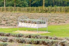 Pezzo di terra coltivato alla lavanda nel campo fotografia stock