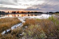 Pezzo di terra coltivato a ostrica naturale al tramonto Immagini Stock Libere da Diritti