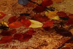 Pfütze von Blättern Lizenzfreies Stockbild