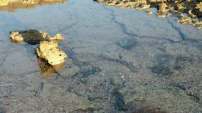 Pfützen auf der Oberfläche des Riffs bei Ebbe am Abend Timelapse stock video