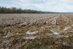 Pfützen des Wassers auf dem vor kurzem gepflogenen Land Stockfoto