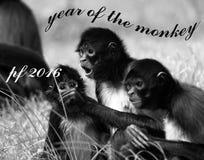Pf 2016 małpa Zdjęcie Stock