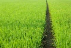Pfad auf dem grünen Gebiet Stockfotos