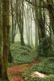 Pfad in den grünen Bäumen des Waldes mit sehr großen Felsen Stockbilder