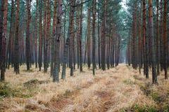 Pfad, der durch den Wald führt Stockfotografie