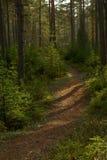 Pfad des Herbstholzes. stockfotos