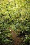 Pfad in die Leuchte des Waldes stockfotografie