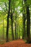 Pfad durch üppigen Wald Stockfotografie