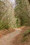 Pfad durch Bäume des Waldes Stockfotografie