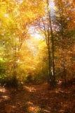 Pfad durch den magischen Wald Lizenzfreie Stockfotografie