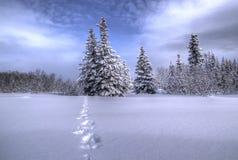 Pfad durch den Schnee Stockfotografie
