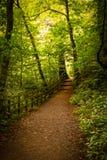 Pfad durch den Wald lizenzfreie stockbilder