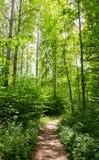 Pfad durch den Wald Lizenzfreies Stockfoto