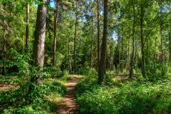 Pfad durch den Wald Lizenzfreies Stockbild
