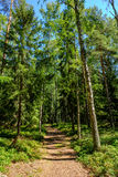 Pfad durch den Wald Stockfotografie