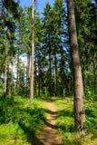 Pfad durch den Wald Stockfotos
