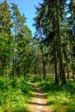 Pfad durch den Wald Stockbild