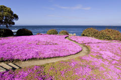 Pfad durch die Blumen Stockfoto
