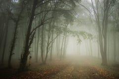 Pfad durch einen schönen Wald mit Nebel Lizenzfreie Stockfotografie