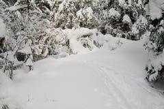 Pfad durch einen schneebedeckten Wald, horizontal Lizenzfreie Stockfotografie