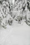 Pfad durch einen schneebedeckten Wald, vertikal Stockbild