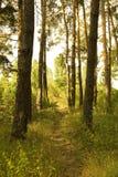 Pfad durch einen Wald Stockbilder