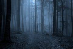 Pfad durch einen Wald mit schwarzen Bäumen und Nebel Lizenzfreies Stockfoto