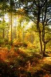 Pfad durch englischen Wald im Herbst lizenzfreie stockfotografie