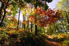 Pfad durch englischen Wald im Herbst lizenzfreie stockbilder