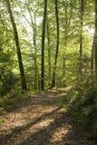 Pfad durch grünes Waldland Lizenzfreie Stockfotografie