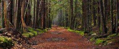 Pfad durch verzauberten Herbst-Wald stockbilder