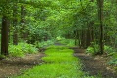 Pfad durch Wald Stockfotografie