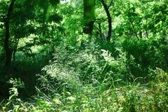Pfad durch wilden Wald Stockfotografie