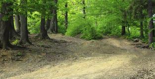 Pfad in einem grünen Wald Stockfotos