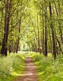 Pfad in einem Sommerwald lizenzfreie stockfotos