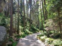 Pfad in einem Wald Stockfotografie